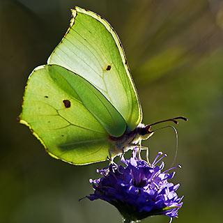 wwt butterfly