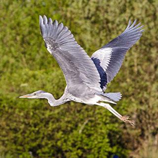 wwt heron